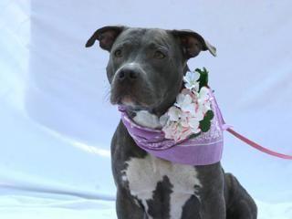 Adoptable Pets Animals Pets Animal Shelter