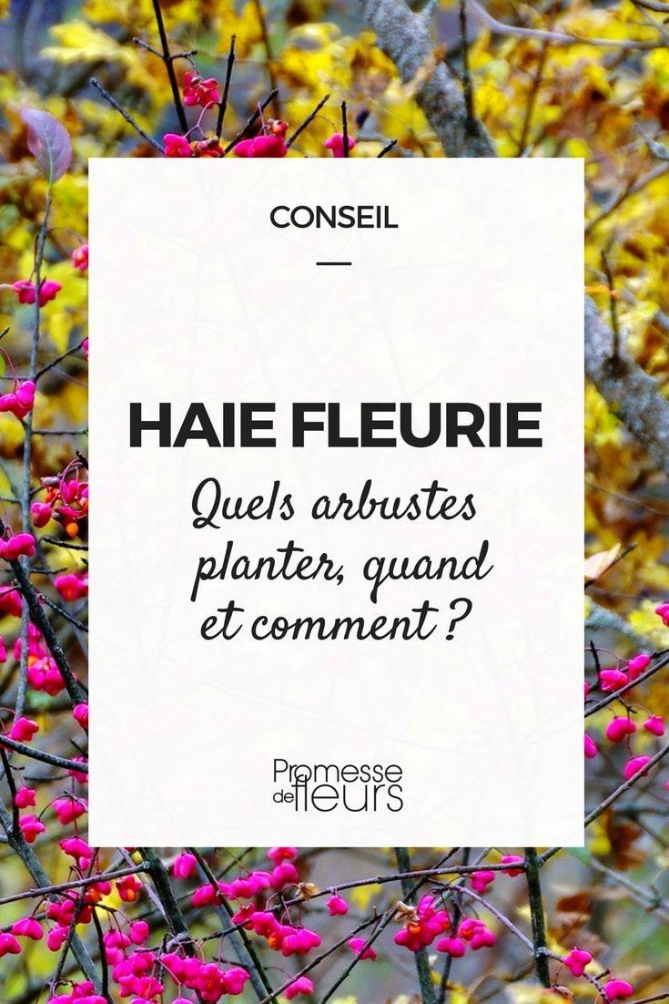 Haie Fleurie Quels Arbustes Planter Quand Et Comment Haie