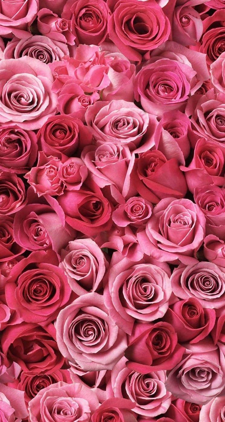 iPhone wallpaper roses flowers Фиолетовые розы, Розовые