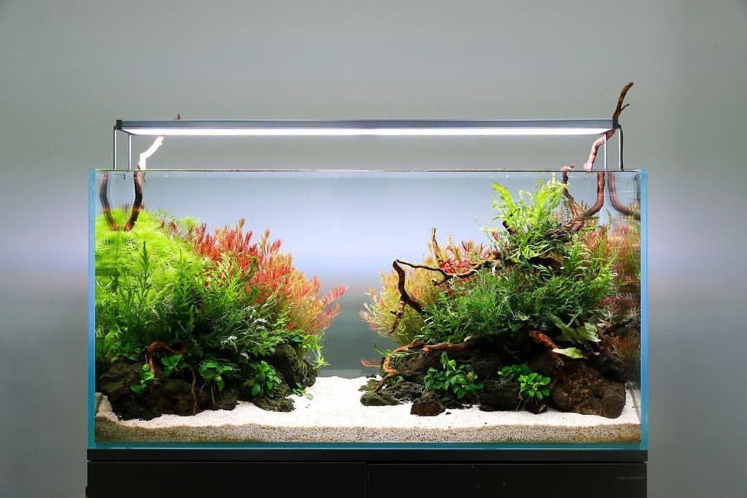 Love This Aquascape Design Aquascape Design Aquarium Landscape Aquarium