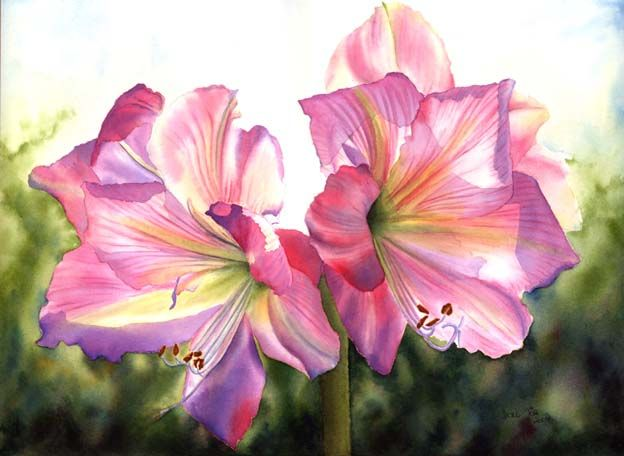 Pink Amaryllis in watercolor - flower painting by Doris Joa
