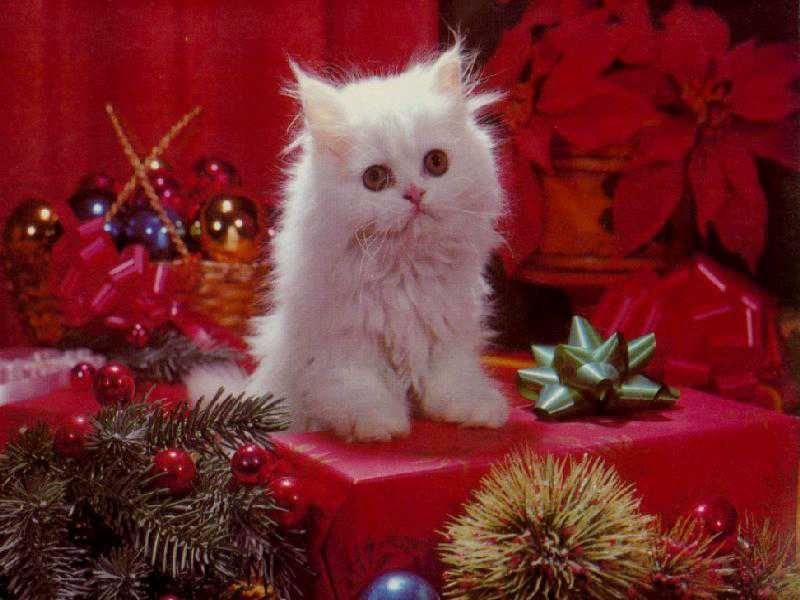 Decorate Your Screen With A Festive Cat Christmas Wallpaper Christmas Animals Christmas Kitten Christmas Cats