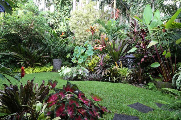 Various Kind Of Tropical Plants For Tropical Garden In The Large Grass Backyard Complete Tropical Garden Design Tropical Landscape Design Tropical Landscaping