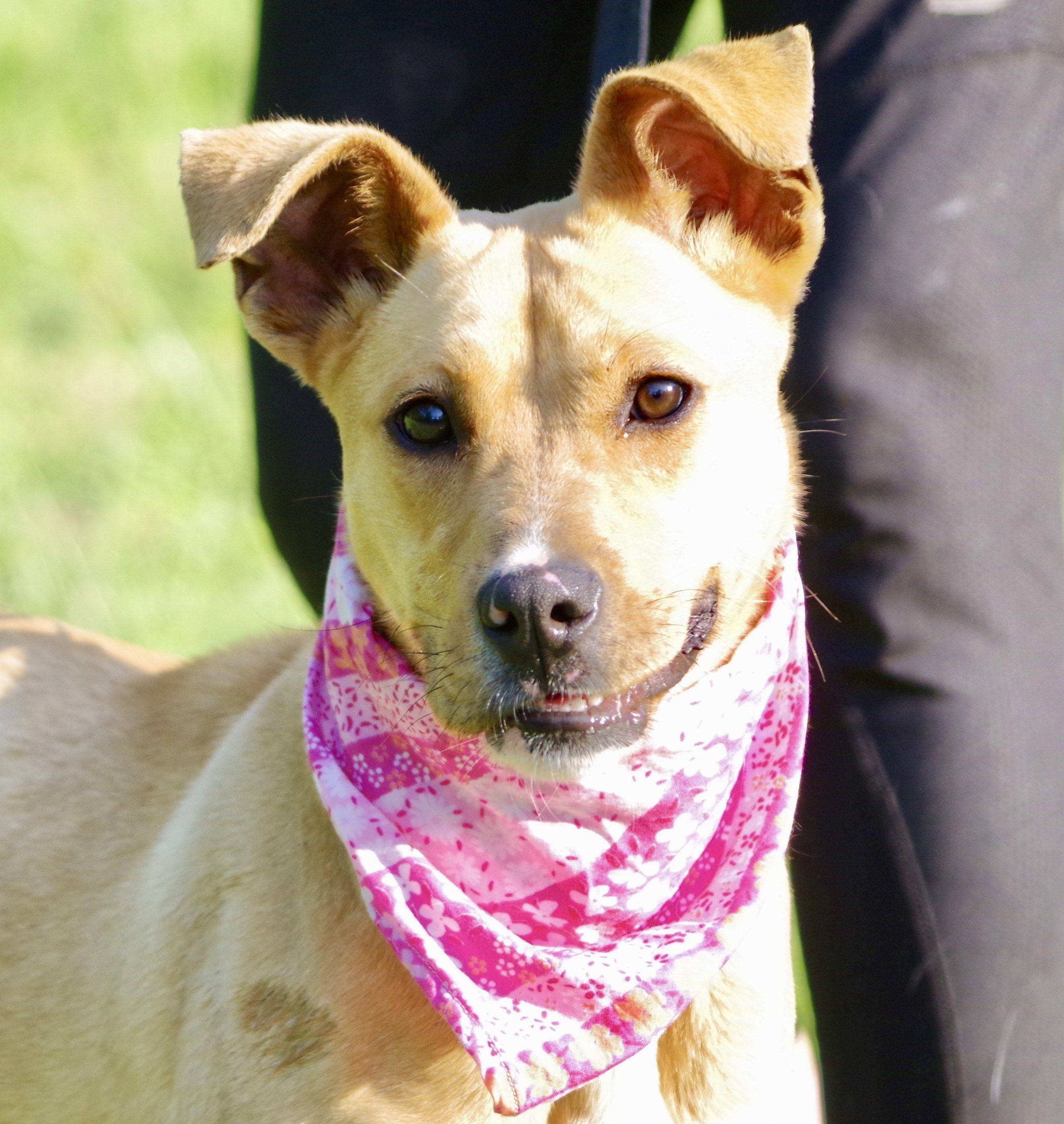 Adopt Mia on Animal rescue, Labrador retriever mix, Animals