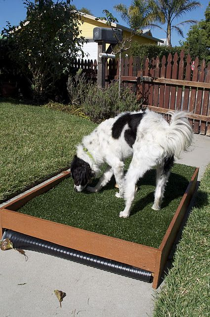 DIY Dog Patio Potty that drains for cleaning! Perfect ...