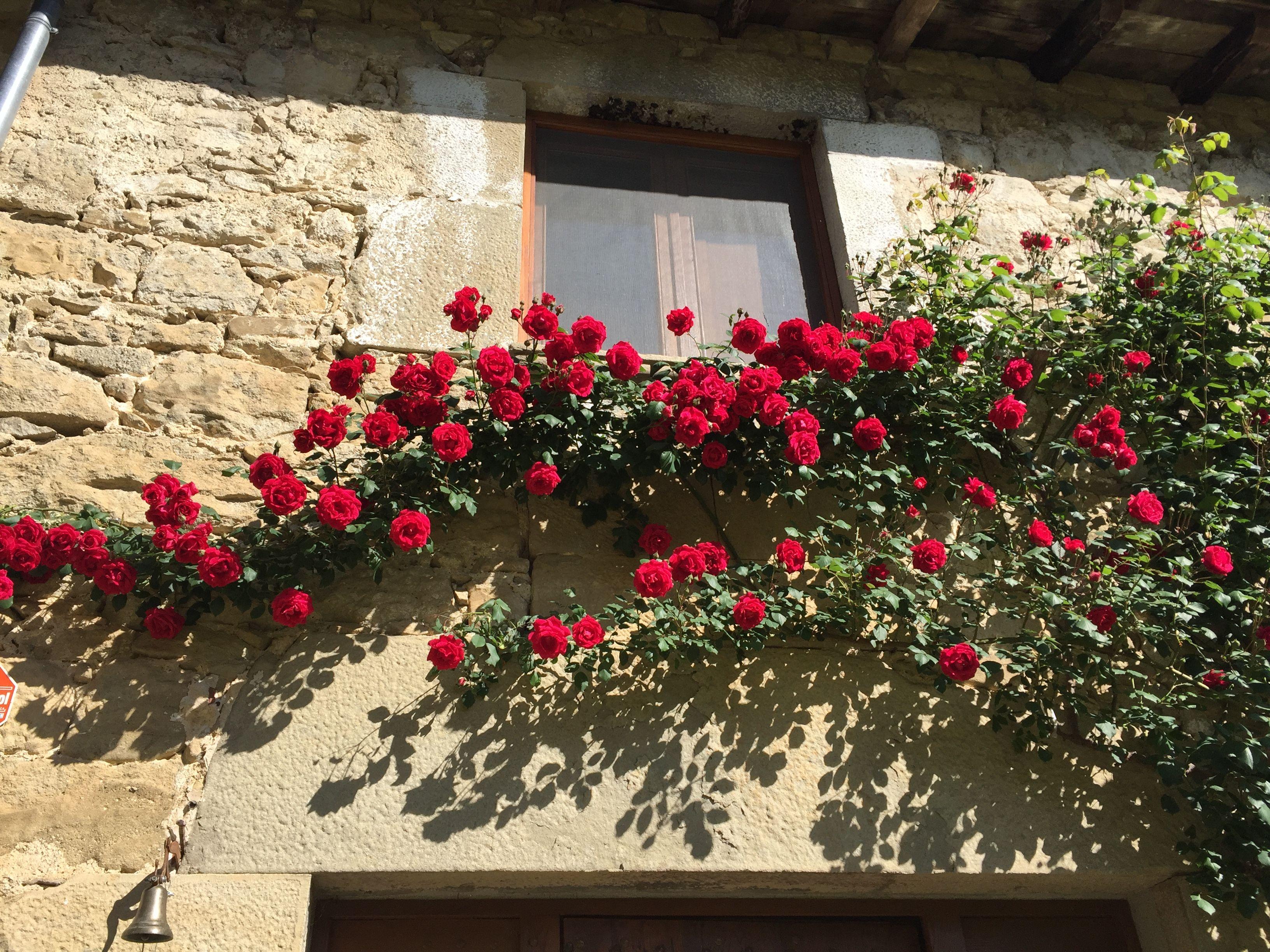 Rosal Trepador Christmas Wreaths Holiday Decor Holiday