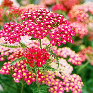 Knock-Out Native Plants