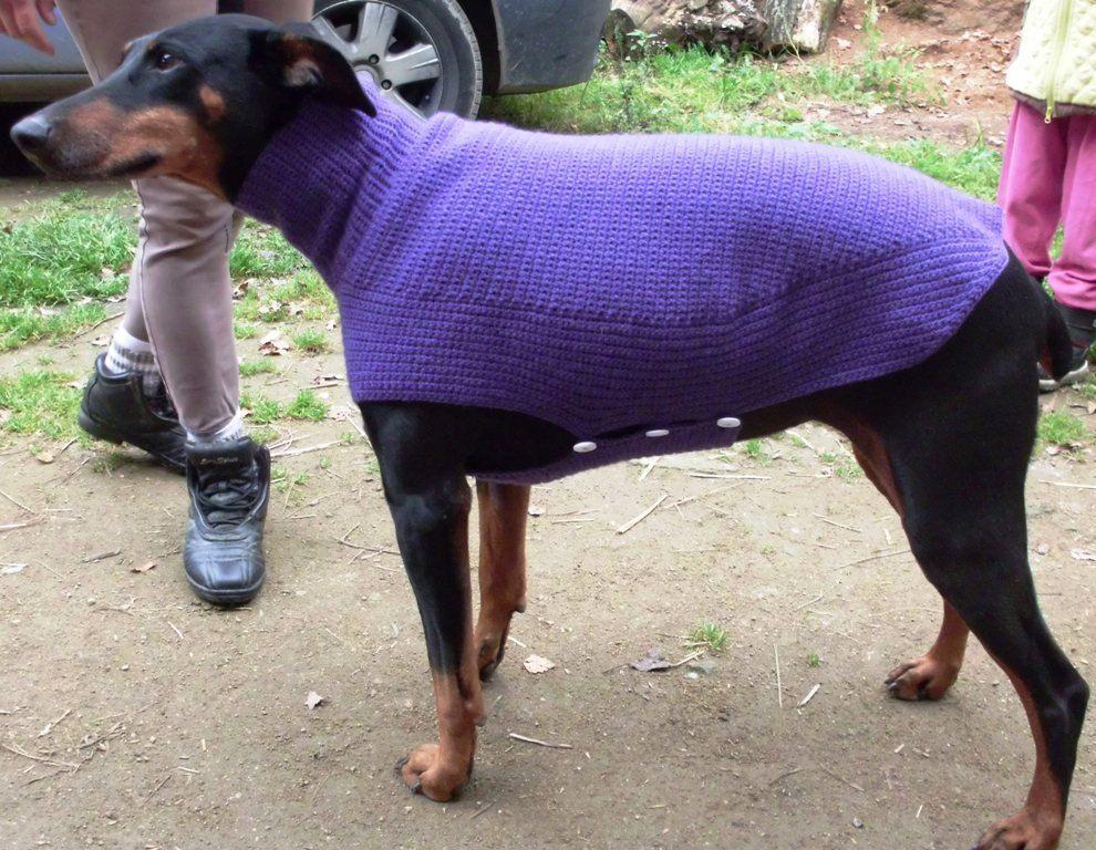 Crochet Dog Sweater In Any Color Dogeez Katz Accessoreez