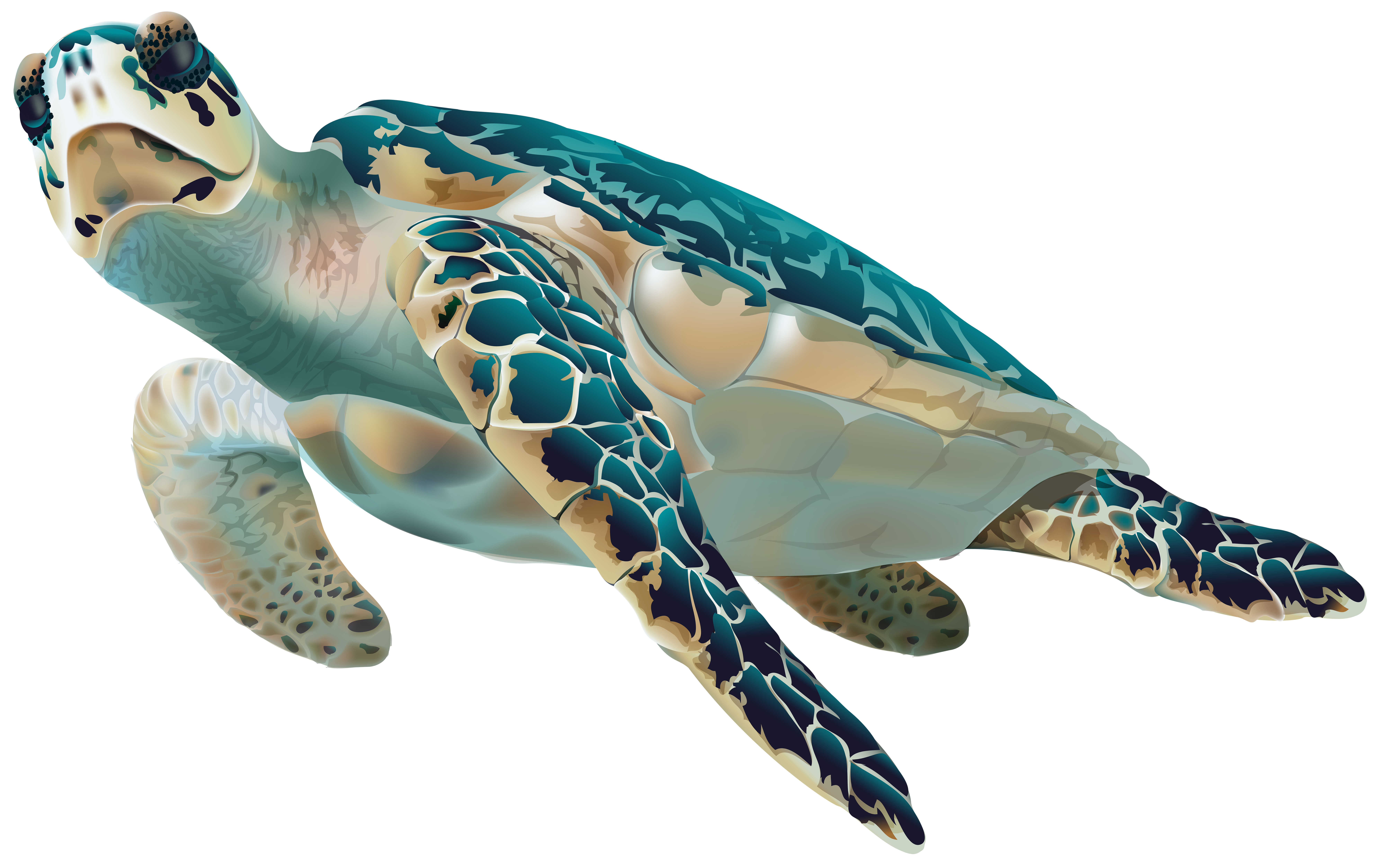 Sea Turtle Png Transparent Clip Art Image Gallery Yopriceville High Quality Images And Transparent Png Free Clipart Turtle Sea Turtle Cartoon Turtle
