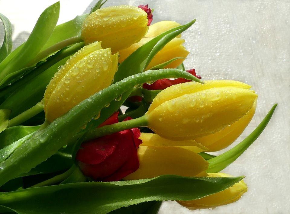 Gratis Obraz Na Pixabay Bukiet Tulipan Kropli Wody Wiosna Tulips Free Online Jigsaw Puzzles Jigsaw Puzzles