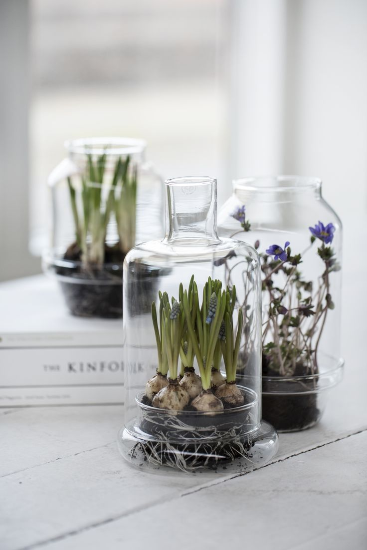 We are sorry Our Leola greenhouse glas vases or propagators are perfect at bringing sprouting spring plants inside your home
