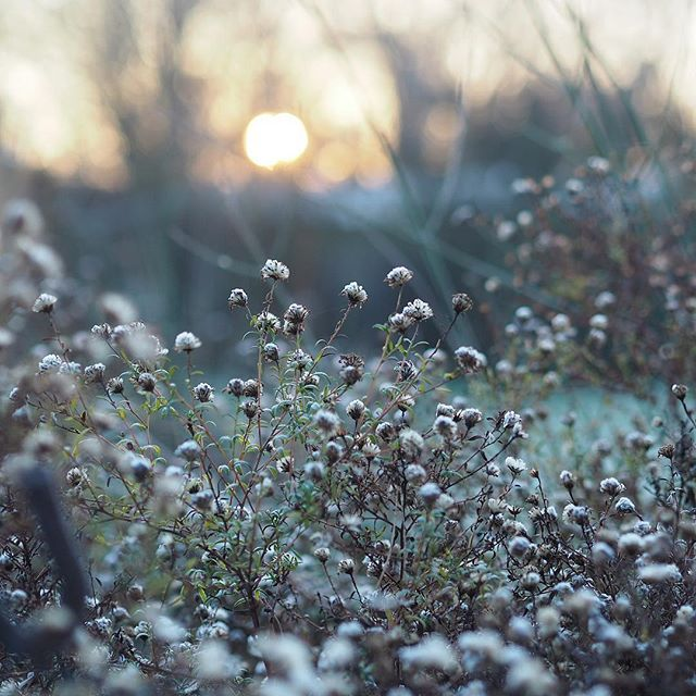 Christmas morning Last nights blanketing fog has disappeared the dusting of frost revealed by ...