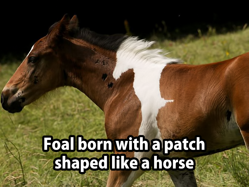Cute Horse Quotes: .Horse On A Horse …