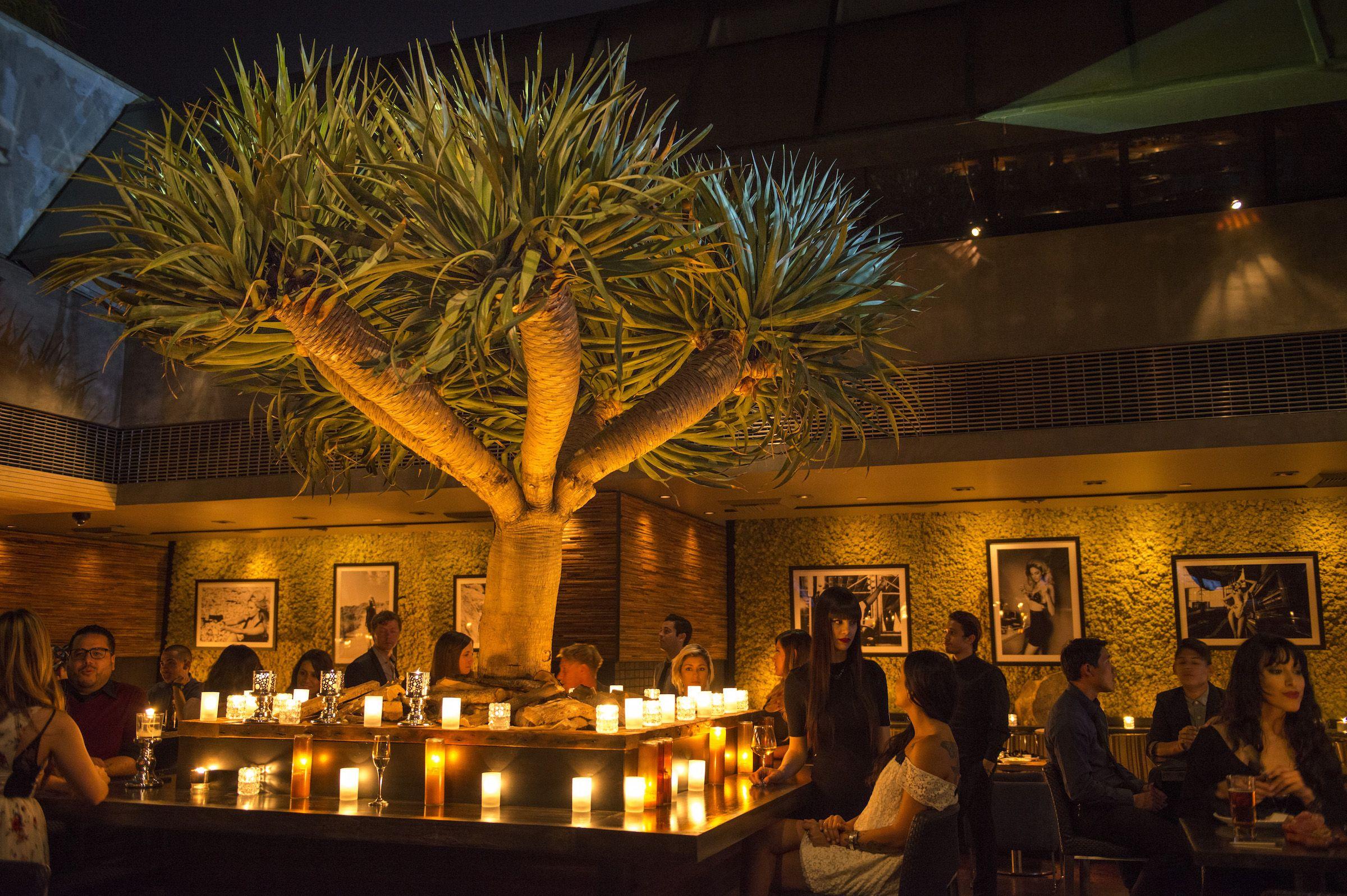 Nice Restaurants In Orange County Best