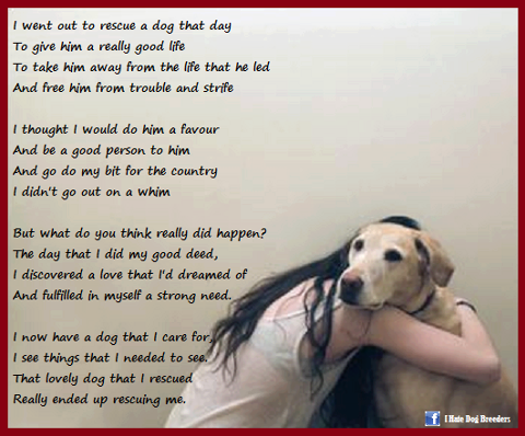 That Is So Beautiful And Very True Of Dogs 3 Dog Quotes Dogs Dog Love