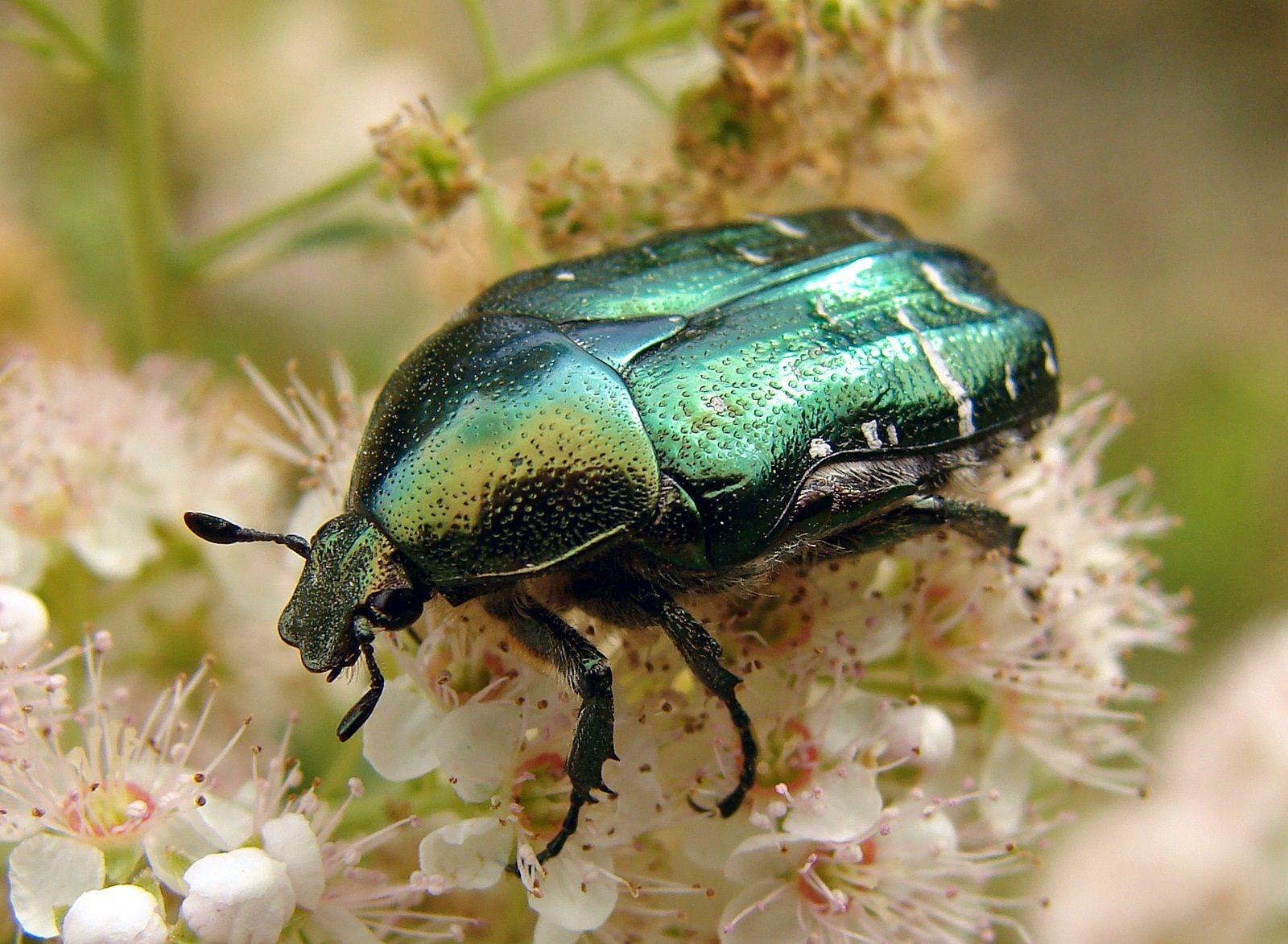 Бабочки, жуки, насекомые, макро, фотографии, природа ...