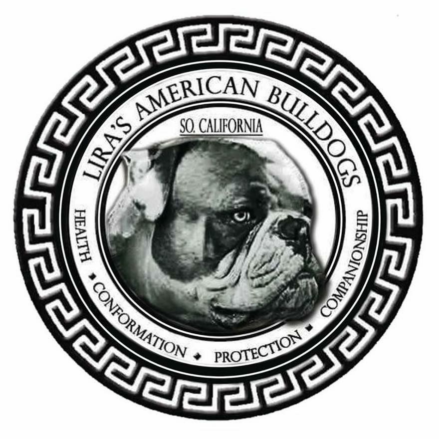 Lira S American Bulldogs