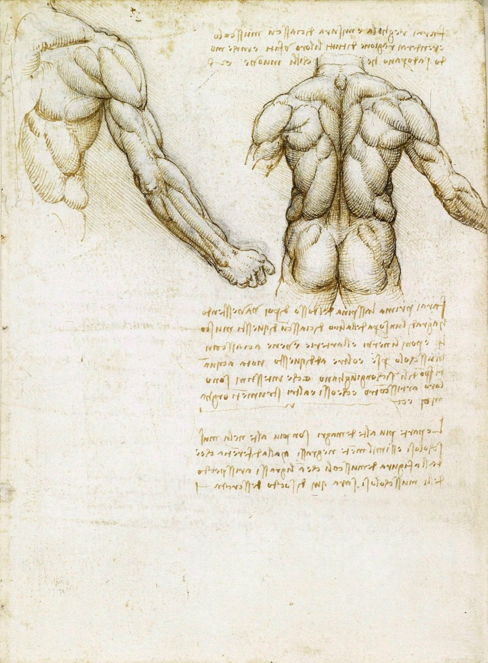 Pin By Fernando On Leonardo Da Vinci Human Anatomy Drawing Anatomy Drawing Drawing Book Pdf