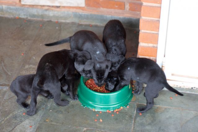 Dog Canine Pet Puppy Puppies Food Bowl Eating Aggression Guarding