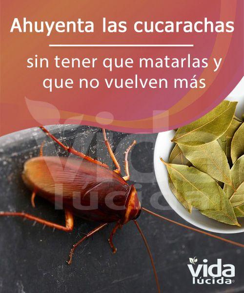 Cómo Ahuyentar Las Cucarachas Sin Tener Que Matarlas Repelente De Insectos Casero Trampas Para Cucarachas Repelente De Cucarachas
