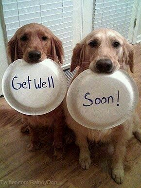 Get Well Soon Cute Animal | www.pixshark.com - 41.9KB