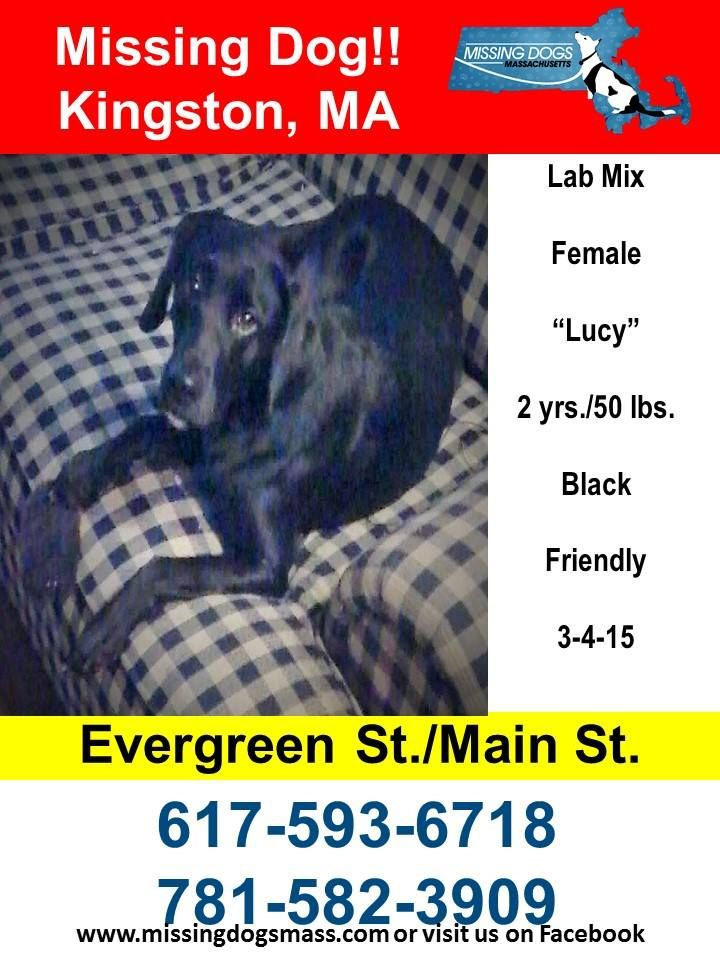 g Dogs Massachusetts 1 hr · Missing Female Black Lab Mix