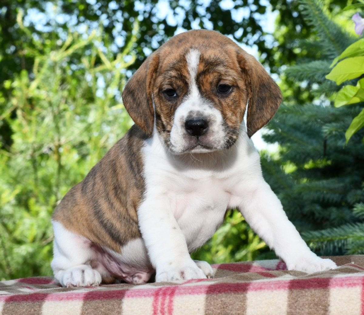 Free Puppies Dogs for Adoption In North Carolina USA