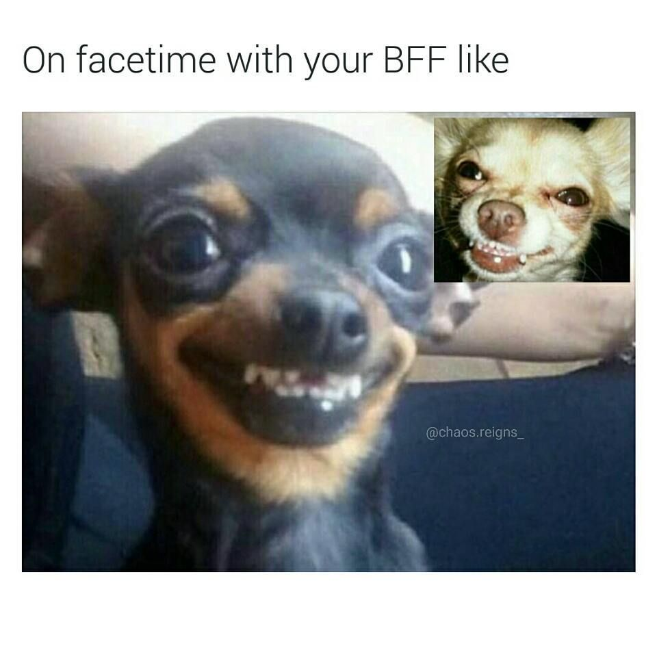 Pin By Autumn Mitchell On Besties Kay Bear Funny Dog Memes