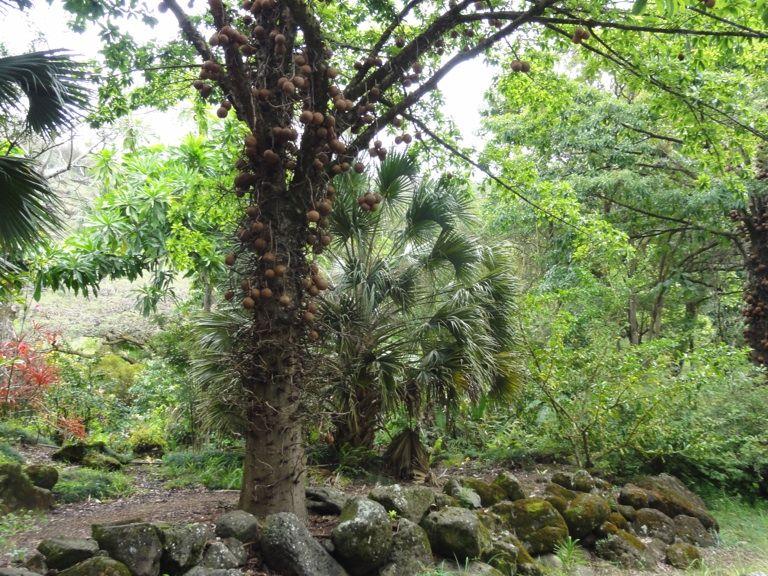 Jungle Oahu