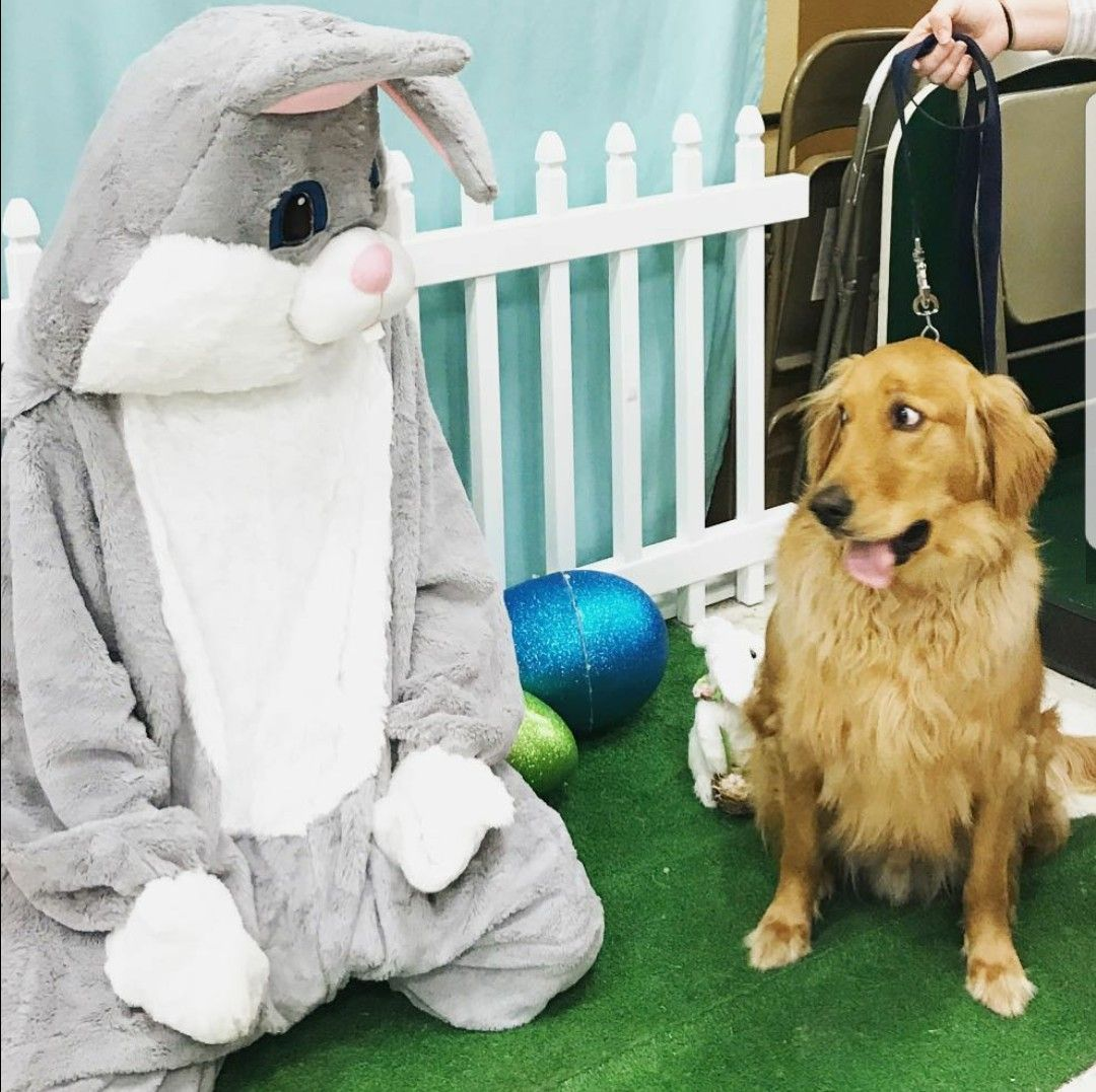 Doggo meeting Easter Bunny for the first time Cat day