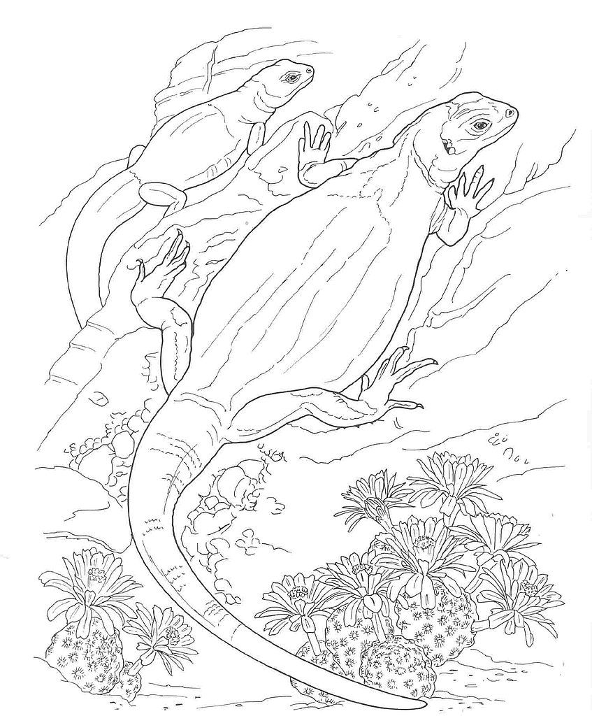 desert animals coloring pages DesertAnimalsColoringPages