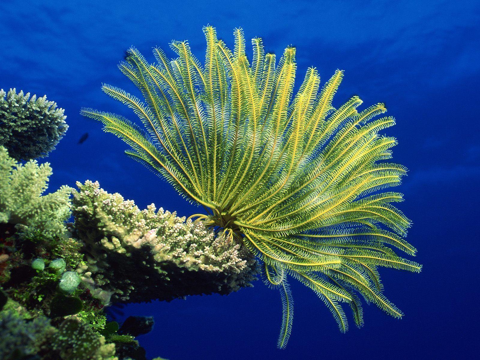 Pin By Cheryl Gubitosi On Beautiful Nature Underwater Images Sea Life Wallpaper Ocean Animals Ocean underwater life fish corals algae