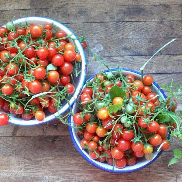 Tumbling toms from our garden. Yum.  Regram via @lovenestuk