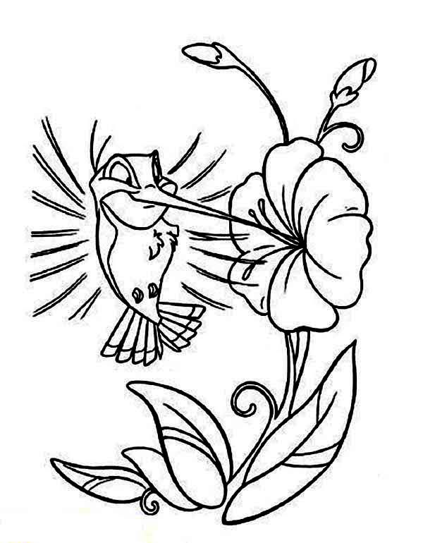 Cartoon Hummingbird Coloring Page