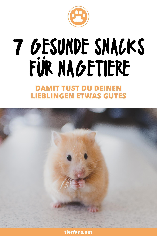 7 Gesunde Snacks Fur Nagetiere Supermarkt Meerschweinchen