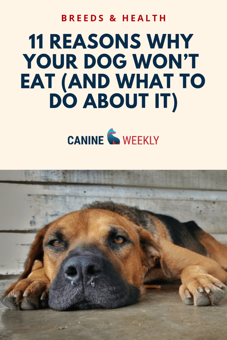 11 Reasons Why Your Dog Won T Eat And What To Do About It Dog Treatment Constipated Dog Dog Medicine