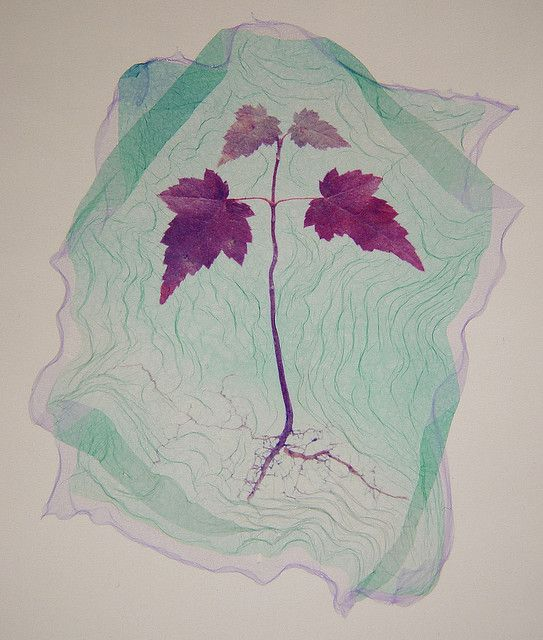 Red Maple Seedling – Polaroid Type 669 on watercolor paper, John Forbes