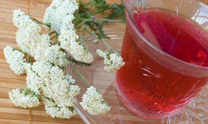 Alquilea Planta Medicinal Astringente Y Anticatarral Plants