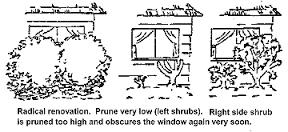 """Résultat de recherche d'images pour """"pruning shrub"""""""