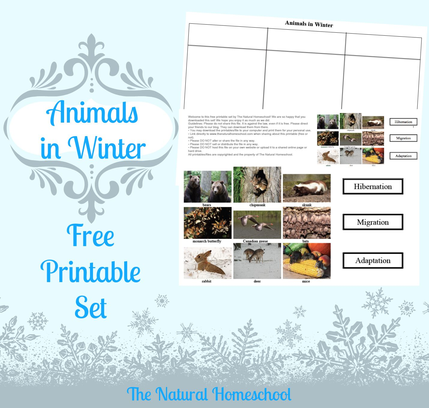 The Best Animals That Hibernate Migrate And Adapt Printable Set The Natural Homeschool Winter Animals Animals That Hibernate Adaptations Activities [ 1361 x 1430 Pixel ]