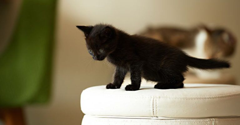 Kitten Litter Training Guide Use These Steps It Always Work Cat Sleeping Kittens Funny Cats