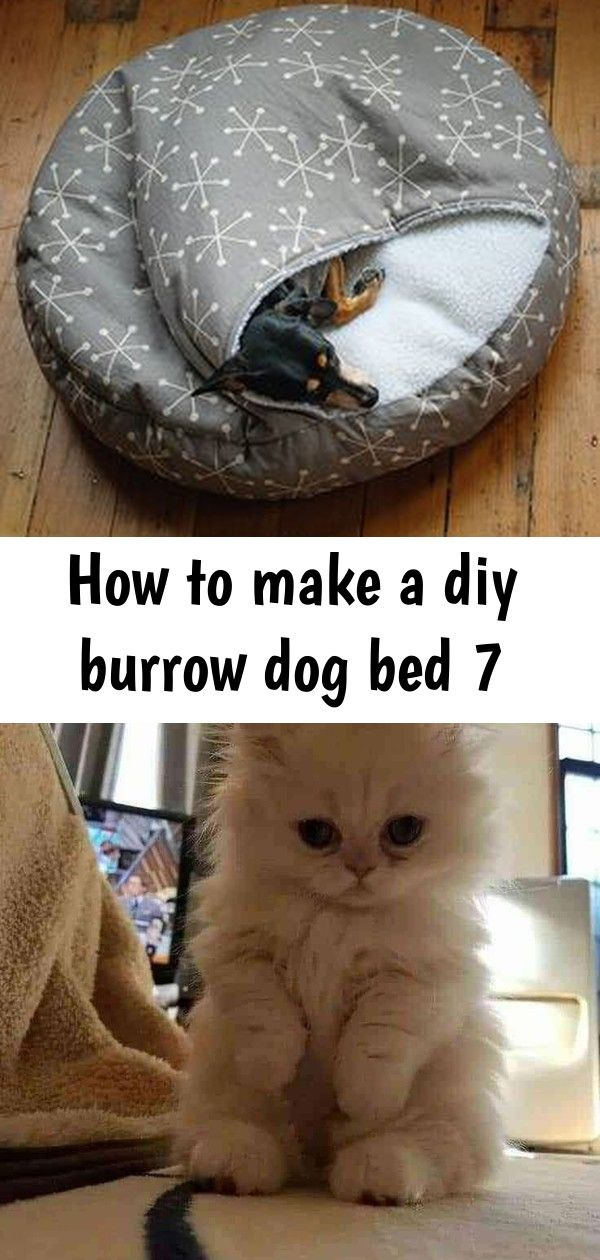 Learn how to make a homemade pet bed with our easyto