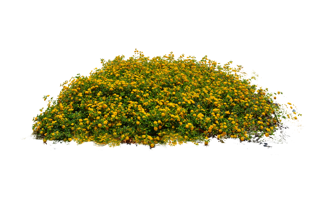 Yellow Flower Bed Stock Photo Dsc 0104 Png By Annamae22 Plants Planting Flowers Yellow Flowers