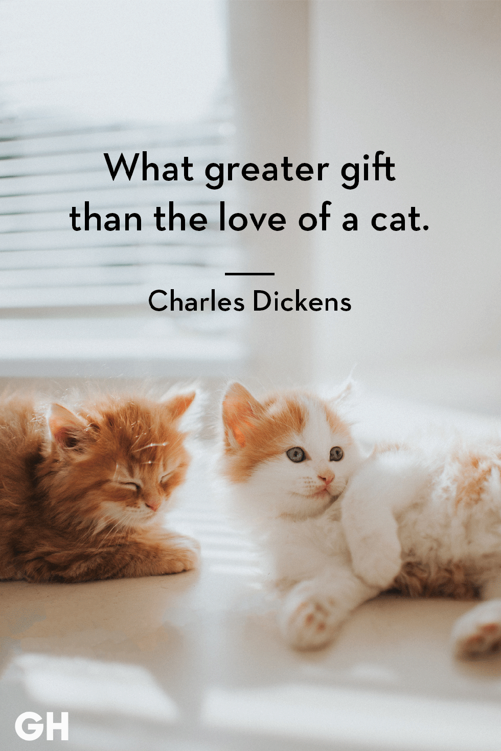 25 Quotes Only Cat Owners Will Understand Cat quotes