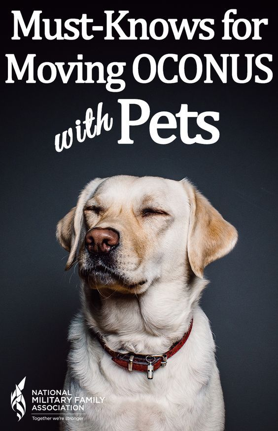 Moving overseas with pets / moving pets overseas