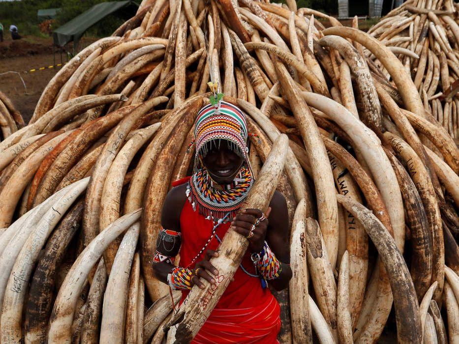 Grande quantidade de marfim é apreendida no Quênia