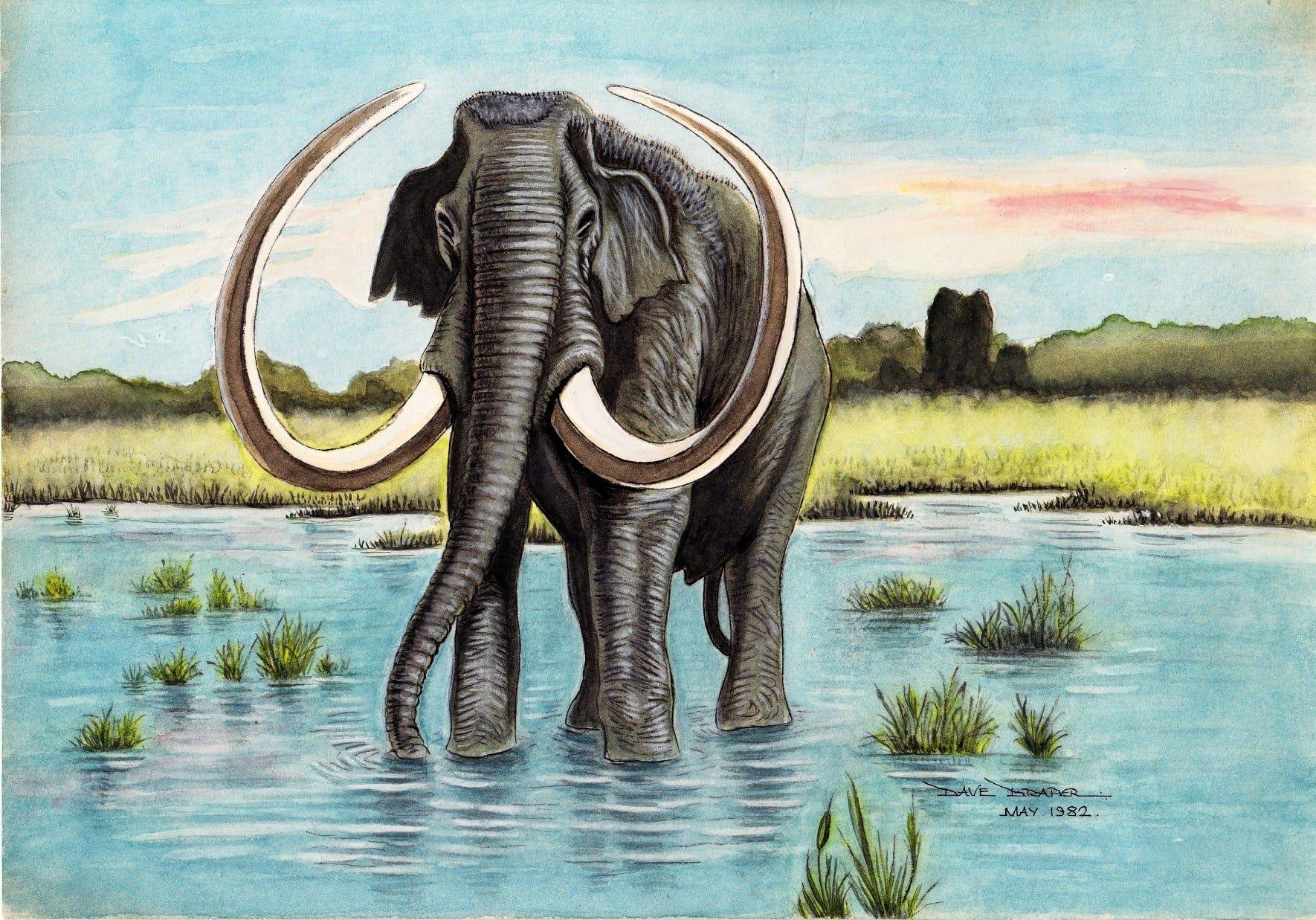 Mammuthus imperator by David Draper Prehistoric world