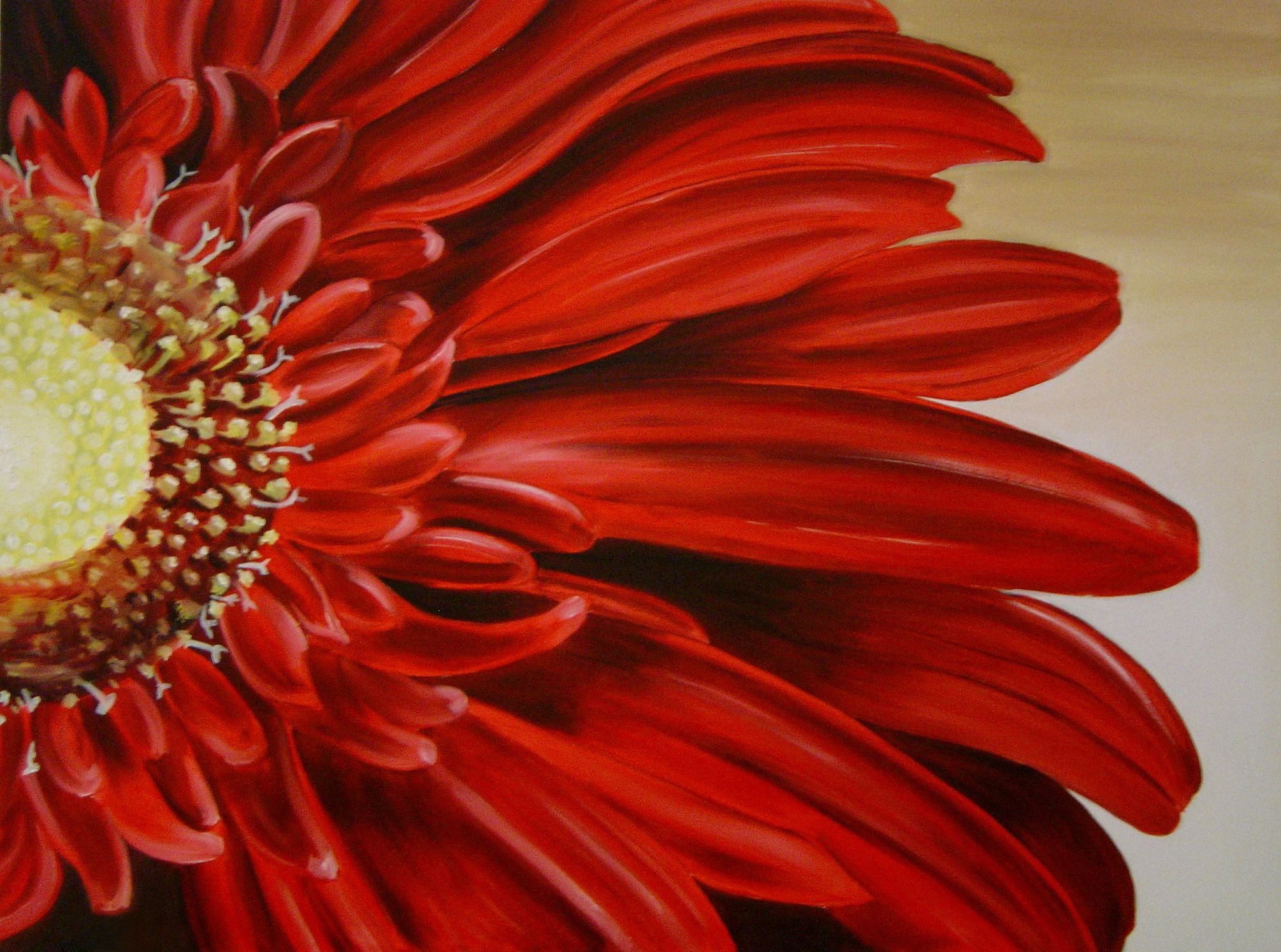 I Love All Flowers I Am Not Picky However The Gerbera Daisy Is