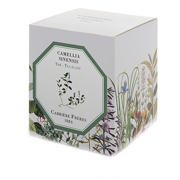 Carriere Freres Tea Plant (Camellia Sinensis) Candle Box
