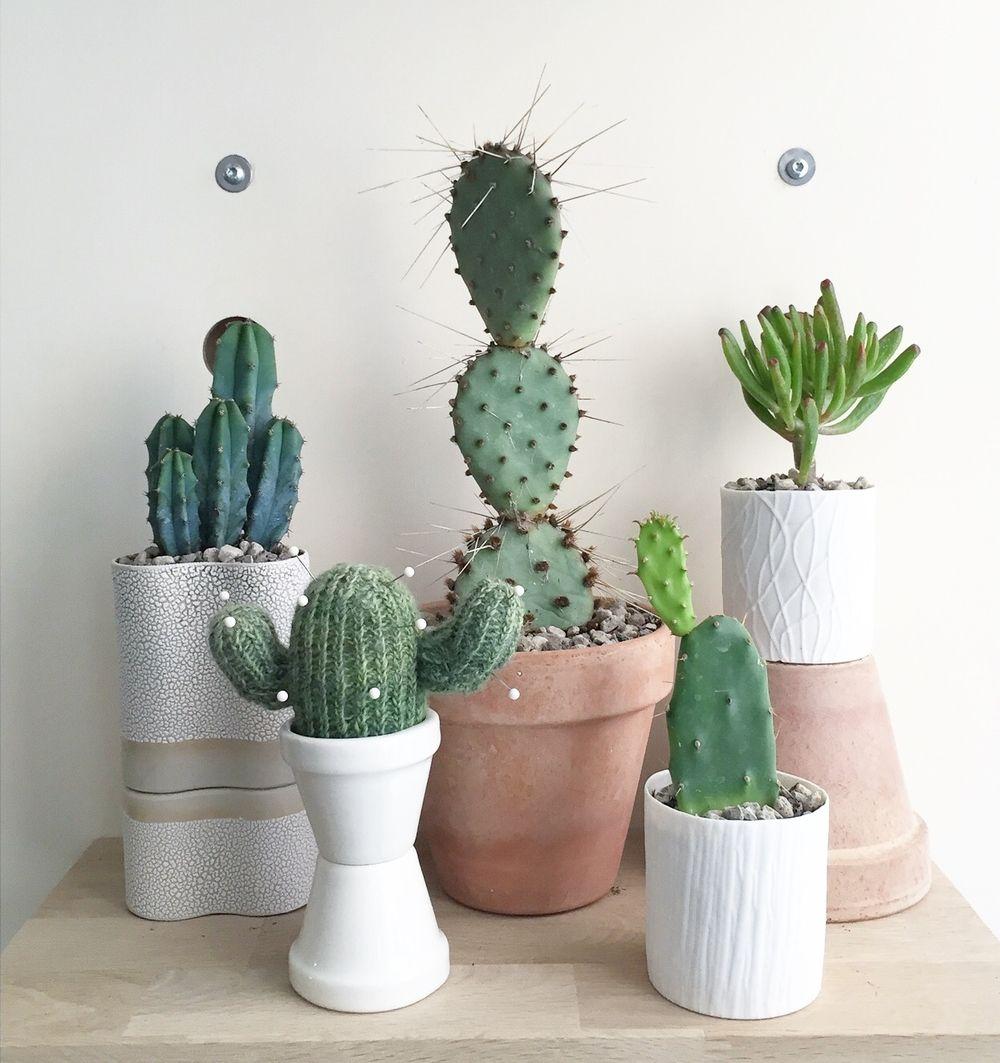 Kaktus Kunst #2 Sisse Lee